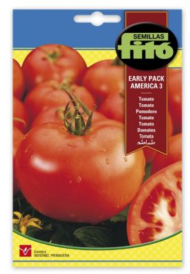 Tomate fito early pack america